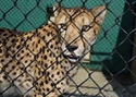 Picture for category Pet & Exotic Animal Enclosures