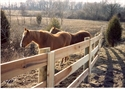 Picture for category Horse & Equestrian Fences