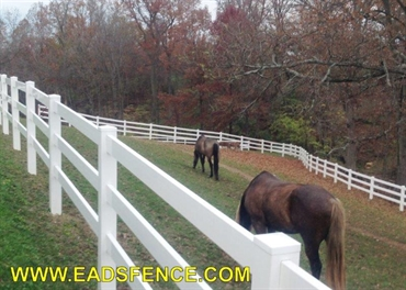 Picture of Horse & Equestrian Photo Gallery