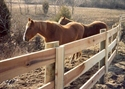 Picture for category Farm & Horse Fence Photo Galleries